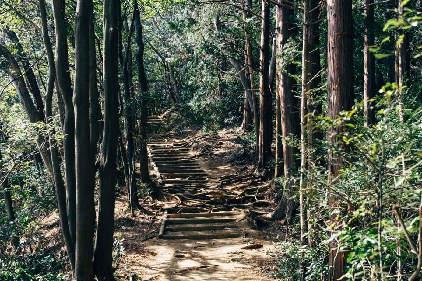 trail daypacks for women